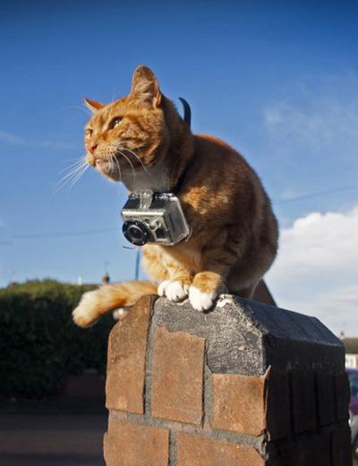 cat go pro neojobs