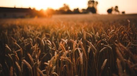 food-sunset-love-field-large